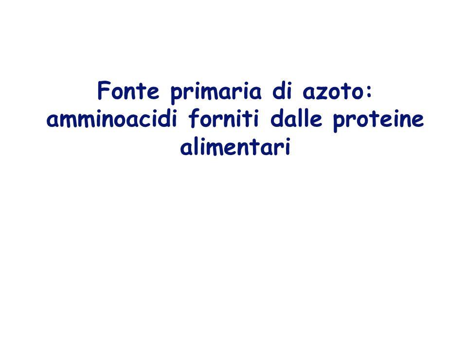SISTEMI DI PROTEOLISI ATP-indipendente LISOSOMIALE contribuisce per il 15% Enzimi attivi a pH 5 -proteine extracellulari (via endocitosi) -proteine di membrana -organelli danneggiati (es mitocondri) ATP-dipendente CITOSOLICO sistema ubiquitina-proteasoma selettivo - proteine citosoliche - proteine regolatorie - proteine difettose (neo -sintetizzate per errori nella sintesi o per ripiegamento sbagliato; invecchiate)