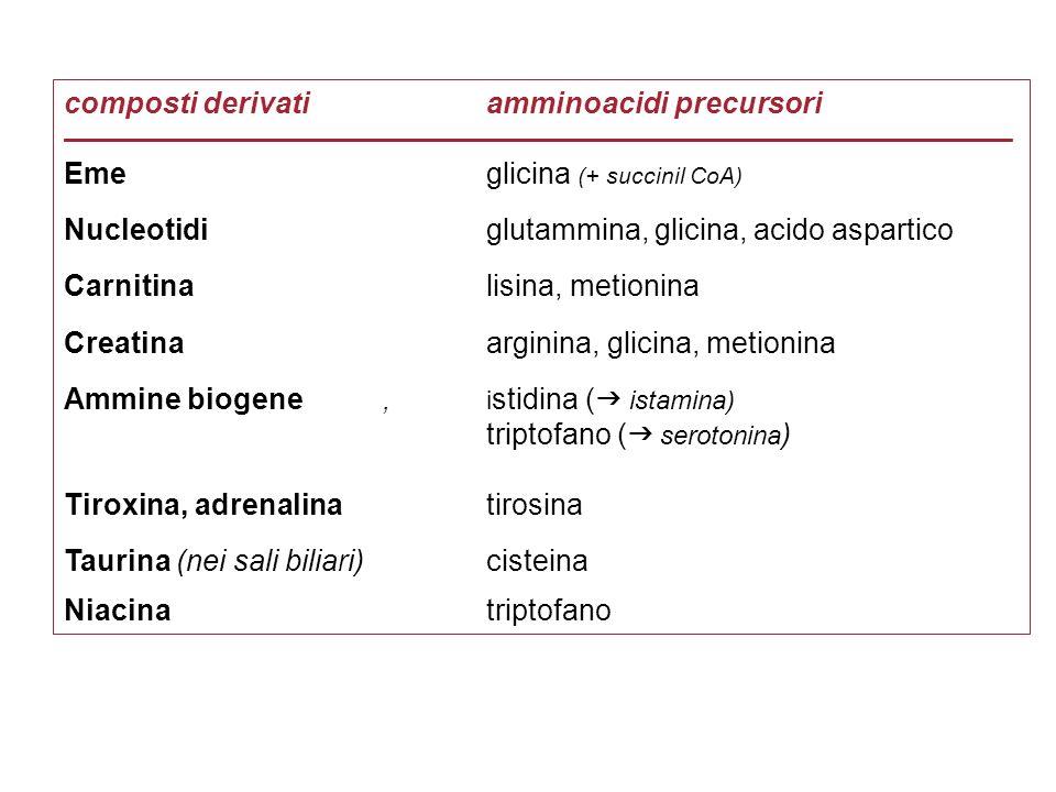 composti derivatiamminoacidi precursori –––––––––––––––––––––––––––––––––––––––––––––––––––––––––– Eme glicina (+ succinil CoA) Nucleotidi glutammina,