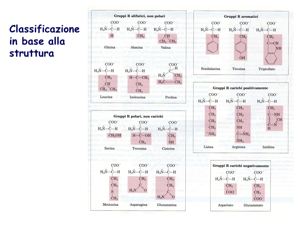 CLASSIFICAZIONE NUTRIZIONALE AMMINOACIDI ESSENZIALI : devono necessariamente essere introdotti preformati con la dieta valina leucina isoleucina metionina fenilalanina triptofano istidina lisina treonina AMMINOACIDI NON ESSENZIALI i.semi-indispensabili risparmiano i precursori essenziali tirosina (sintetizzata da fenilalanina) cisteina (sintetizzata da metionina)