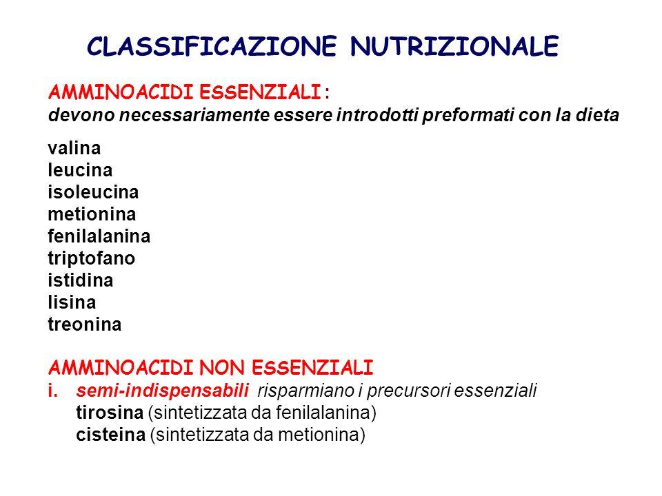 CLASSIFICAZIONE NUTRIZIONALE AMMINOACIDI ESSENZIALI : devono necessariamente essere introdotti preformati con la dieta valina leucina isoleucina metio