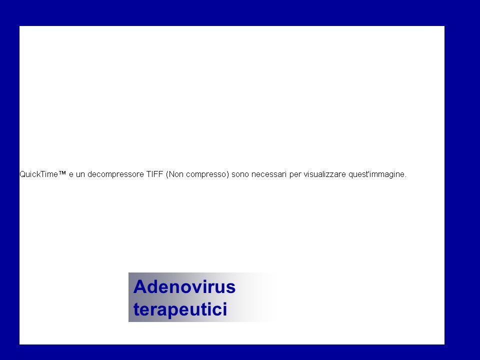 Adenovirus terapeutici