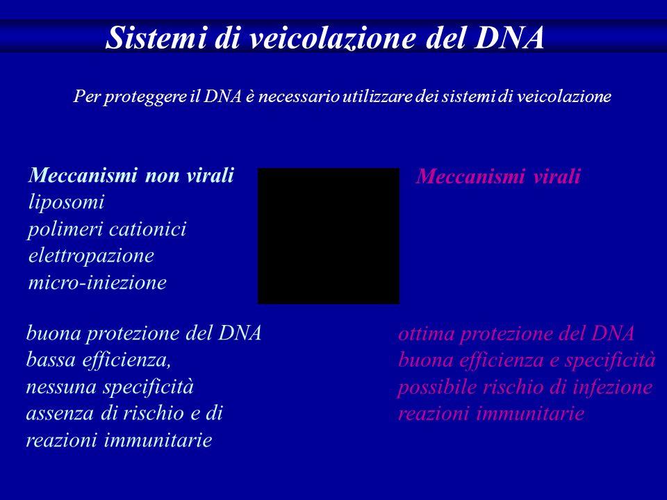 Il DNA si degrada velocemente Sistemi di veicolazione del DNA Per proteggere il DNA è necessario utilizzare dei sistemi di veicolazione Meccanismi non