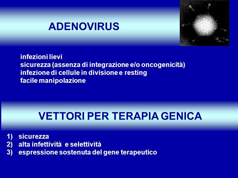 infezioni lievi sicurezza (assenza di integrazione e/o oncogenicità) infezione di cellule in divisione e resting facile manipolazione ADENOVIRUS VETTO