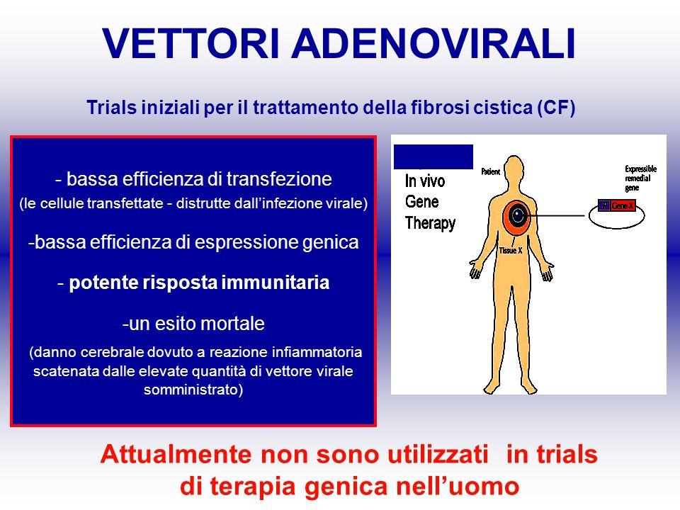 VETTORI ADENOVIRALI Trials iniziali per il trattamento della fibrosi cistica (CF) - bassa efficienza di transfezione (le cellule transfettate - distru