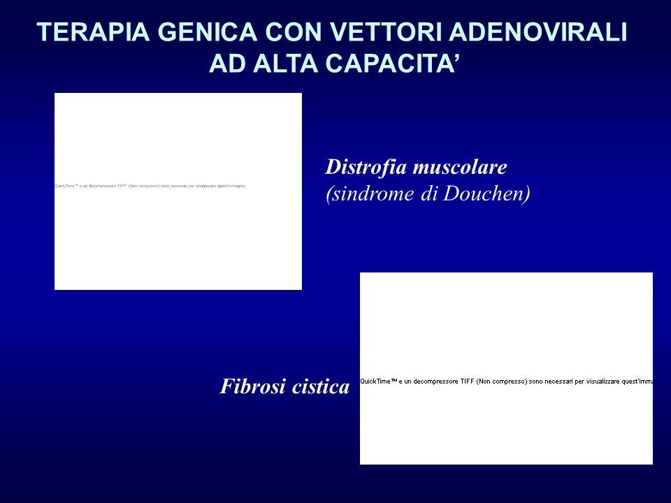 TERAPIA GENICA CON VETTORI ADENOVIRALI AD ALTA CAPACITA Distrofia muscolare (sindrome di Douchen) Fibrosi cistica