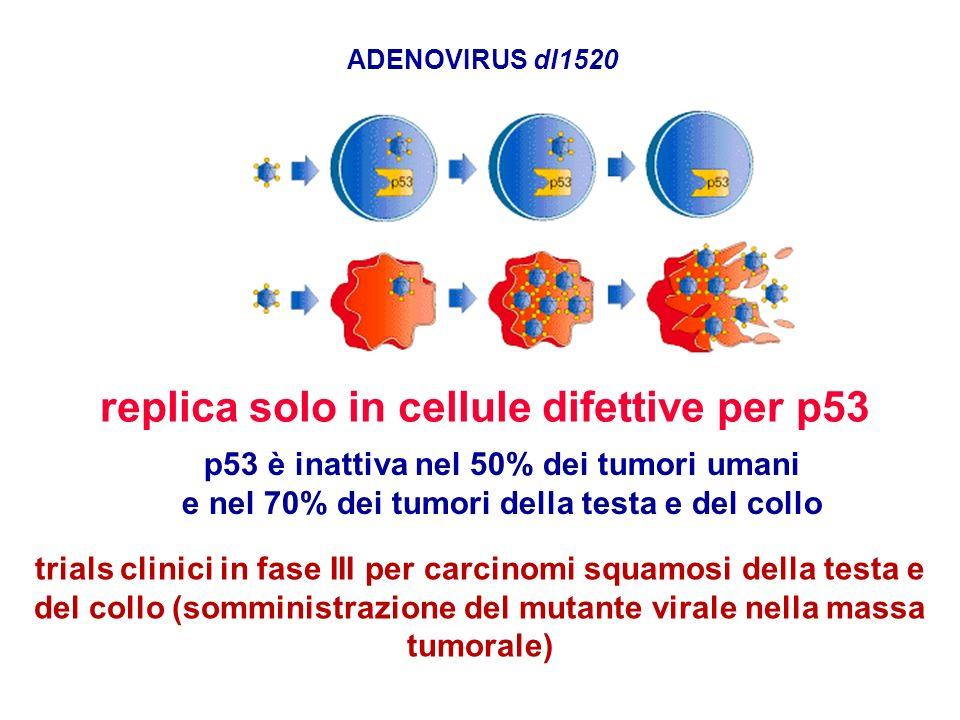 ADENOVIRUS dl1520 replica solo in cellule difettive per p53 p53 è inattiva nel 50% dei tumori umani e nel 70% dei tumori della testa e del collo trial