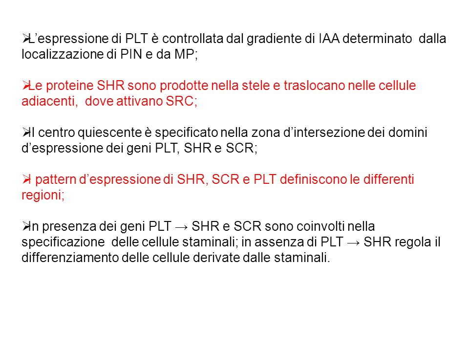 Lespressione di PLT è controllata dal gradiente di IAA determinato dalla localizzazione di PIN e da MP; Le proteine SHR sono prodotte nella stele e tr