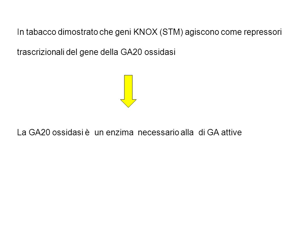 Biosintesi delle Gibberelline (dalla GA 12 - aldeide) GA20 ox