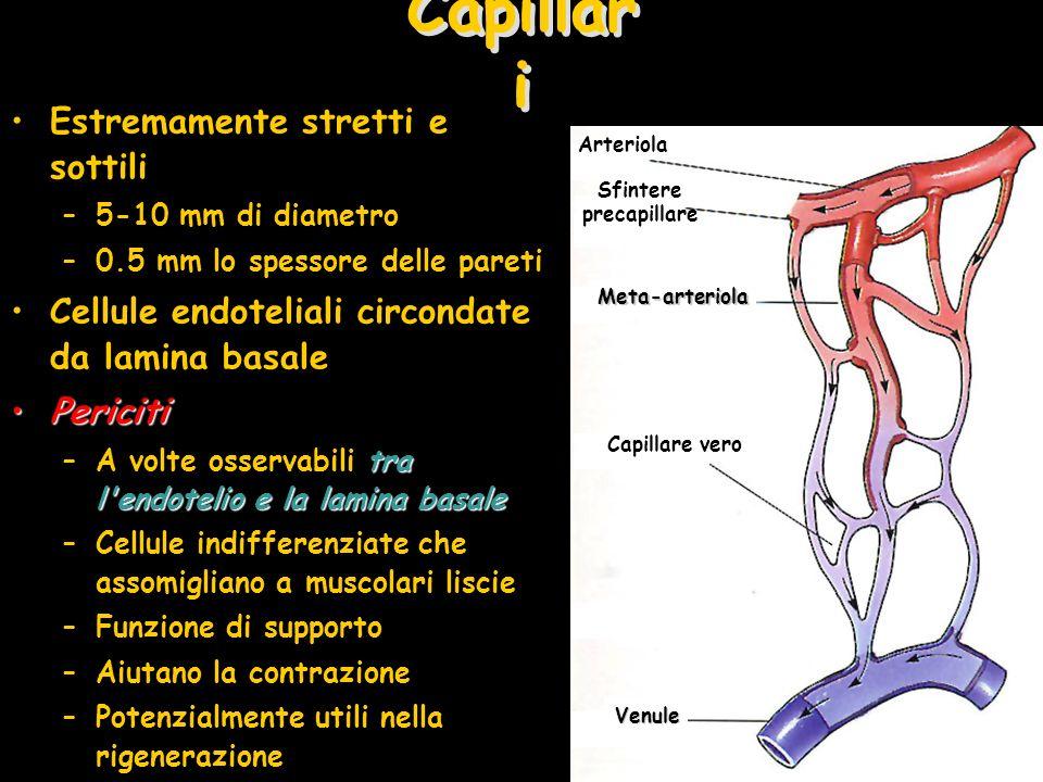 Estremamente stretti e sottili –5-10 mm di diametro –0.5 mm lo spessore delle pareti Cellule endoteliali circondate da lamina basale PericitiPericiti