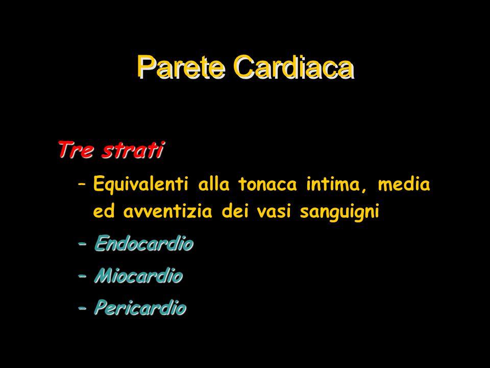 Parete Cardiaca Tre strati –Equivalenti alla tonaca intima, media ed avventizia dei vasi sanguigni –Endocardio –Miocardio –Pericardio