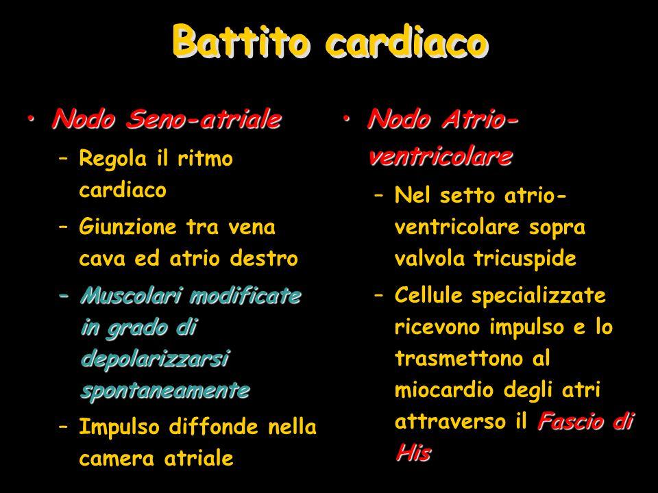 Battito cardiaco Nodo Seno-atrialeNodo Seno-atriale –Regola il ritmo cardiaco –Giunzione tra vena cava ed atrio destro –Muscolari modificate in grado