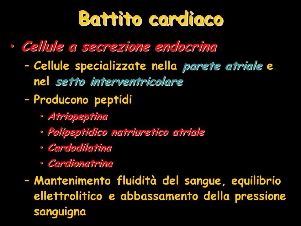 Battito cardiaco Cellule a secrezione endocrinaCellule a secrezione endocrina parete atriale setto interventricolare –Cellule specializzate nella pare