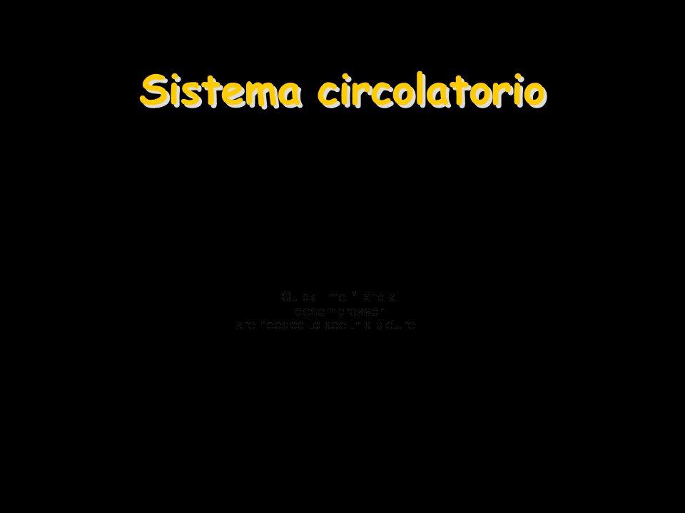 Sistema circolatorio