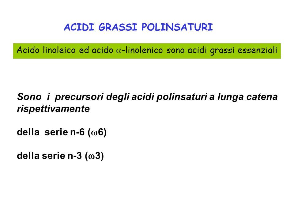 Sono i precursori degli acidi polinsaturi a lunga catena rispettivamente della serie n-6 ( 6) della serie n-3 ( 3) Acido linoleico ed acido -linolenic