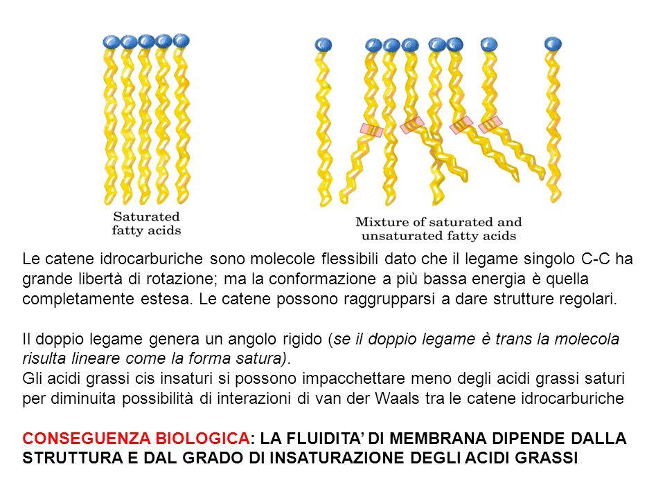 Le catene idrocarburiche sono molecole flessibili dato che il legame singolo C-C ha grande libertà di rotazione; ma la conformazione a più bassa energ