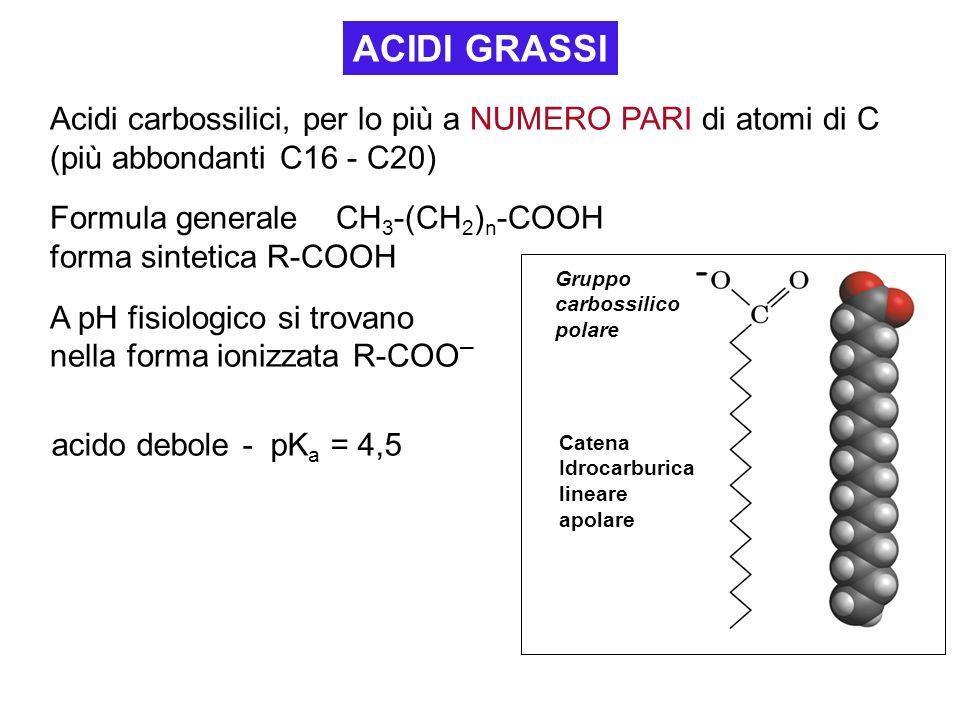 ACIDI GRASSI Acidi carbossilici, per lo più a NUMERO PARI di atomi di C (più abbondanti C16 - C20) Formula generale CH 3 -(CH 2 ) n -COOH forma sintet