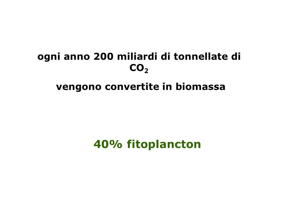 ogni anno 200 miliardi di tonnellate di CO 2 vengono convertite in biomassa 40% fitoplancton
