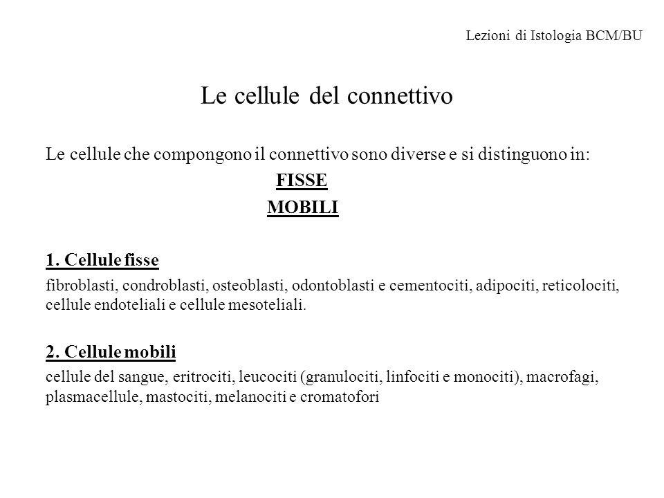 Le cellule fisse del Connettivo Fibroblasti Si trovano diffusi in tutto il connettivo ove sintetizzano la matrice extracellulare.