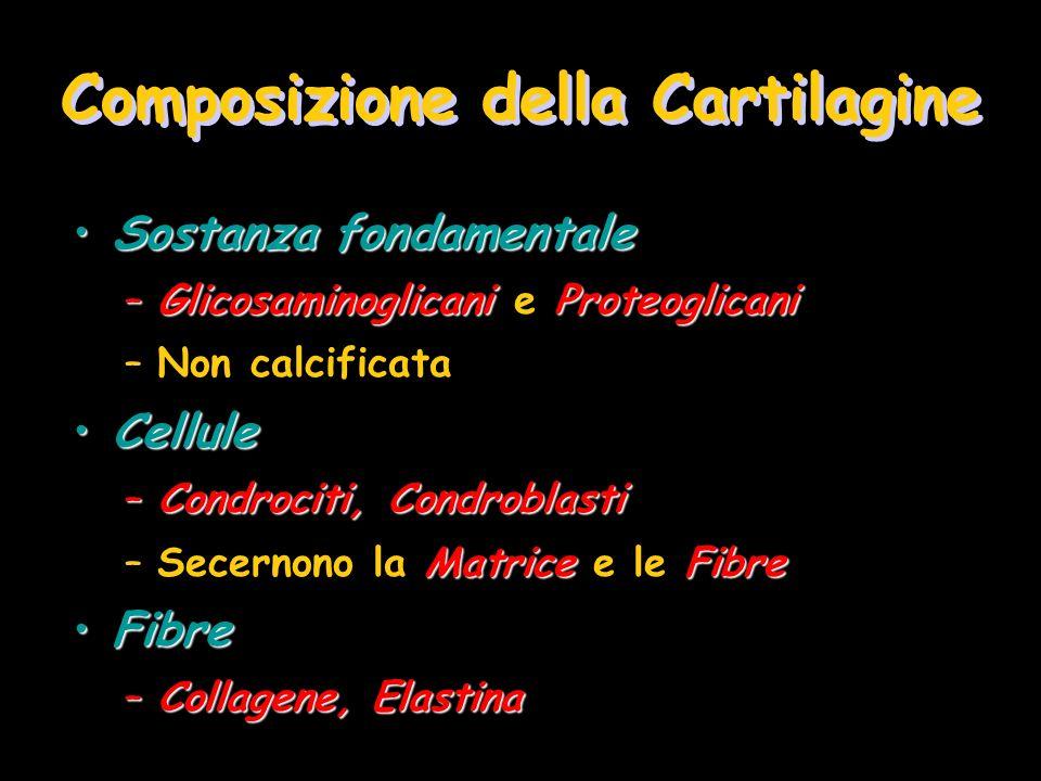 Composizione della Cartilagine Sostanza fondamentaleSostanza fondamentale –GlicosaminoglicaniProteoglicani –Glicosaminoglicani e Proteoglicani –Non ca