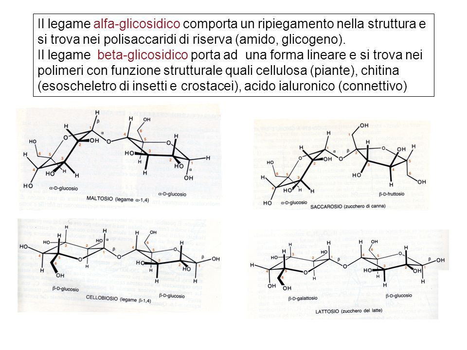 Il legame alfa-glicosidico comporta un ripiegamento nella struttura e si trova nei polisaccaridi di riserva (amido, glicogeno). Il legame beta-glicosi
