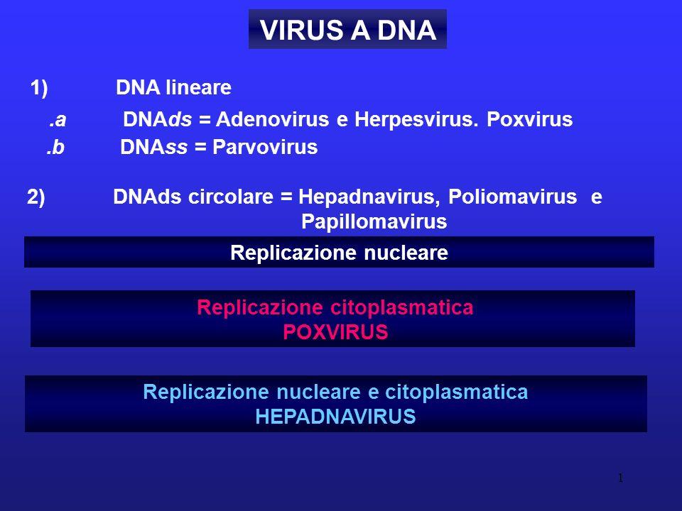 1 VIRUS A DNA Replicazione nucleare e citoplasmatica HEPADNAVIRUS Replicazione nucleare Replicazione citoplasmatica POXVIRUS.a DNAds = Adenovirus e He