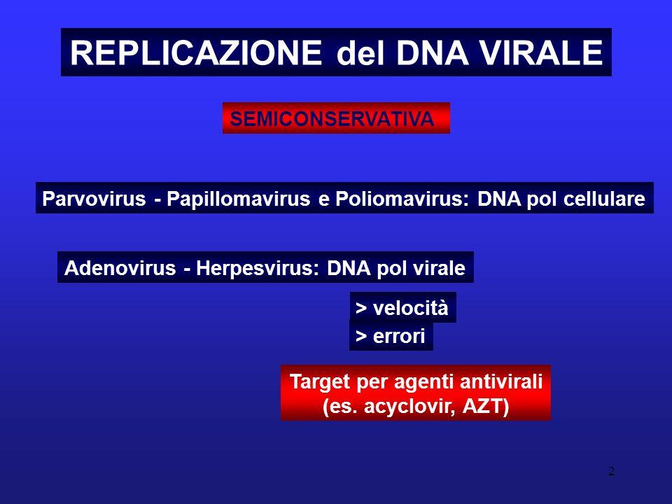 3 REPLICAZIONE DEI VIRUS a DNA PROBLEMI Richiesta di un primer di inizio della replicazione del DNA lo stesso problema della cellula ospite: le DNA polimerasi non sono in grado di replicare il DNA a partire da uno stampo a ssDNA.