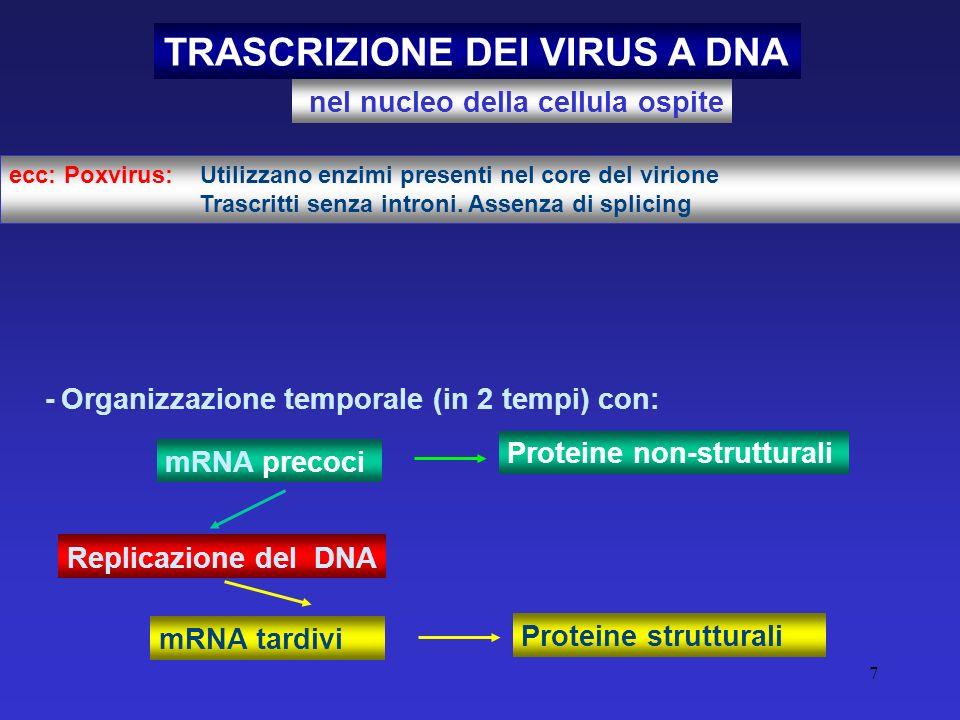 7 TRASCRIZIONE DEI VIRUS A DNA nel nucleo della cellula ospite Replicazione del DNA ecc: Poxvirus: Utilizzano enzimi presenti nel core del virione Tra