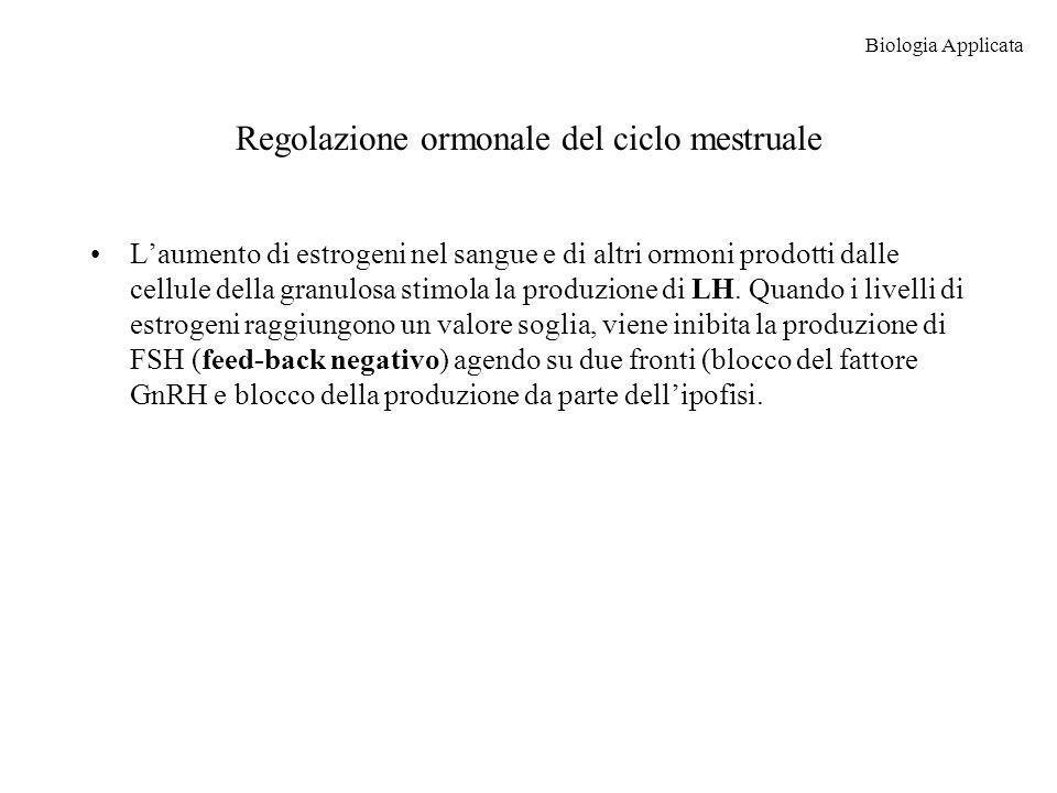 Regolazione ormonale del ciclo mestruale Laumento di estrogeni nel sangue e di altri ormoni prodotti dalle cellule della granulosa stimola la produzio
