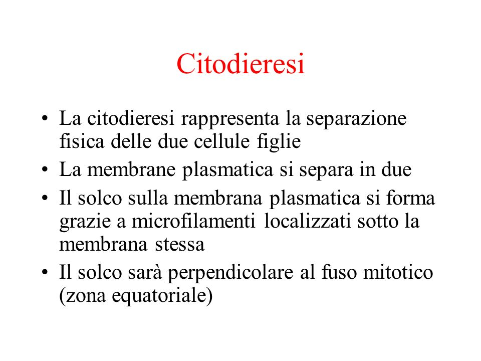 Citodieresi La citodieresi rappresenta la separazione fisica delle due cellule figlie La membrane plasmatica si separa in due Il solco sulla membrana