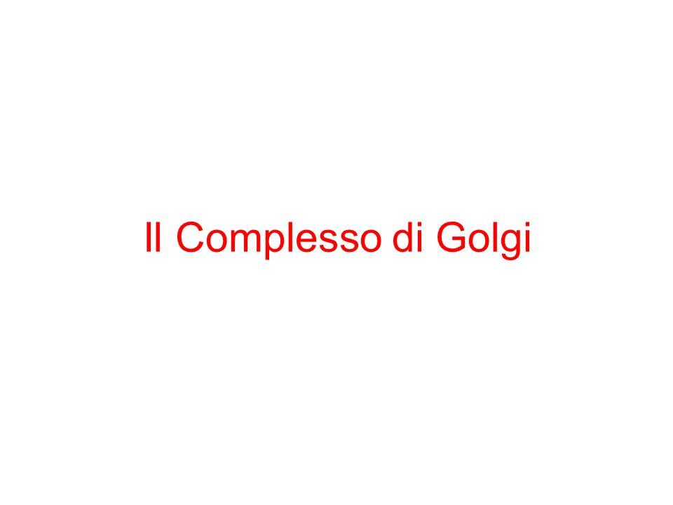 Il Complesso di Golgi