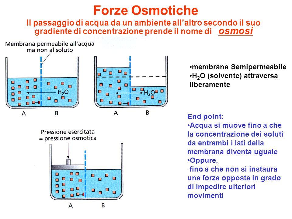 membrana Semipermeabile H 2 O (solvente) attraversa liberamente End point: Acqua si muove fino a che la concentrazione dei soluti da entrambi i lati d