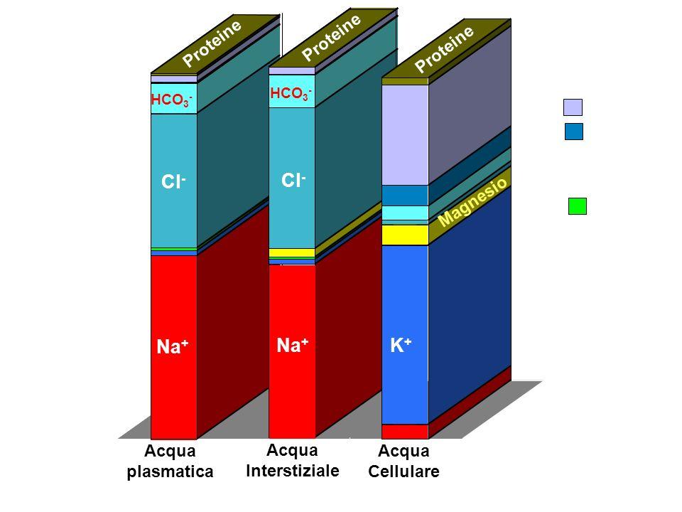 Concentraz. (mEq/l) 0 100 200 300 Acqua plasmatica Na + Cl - Proteine HCO 3 -