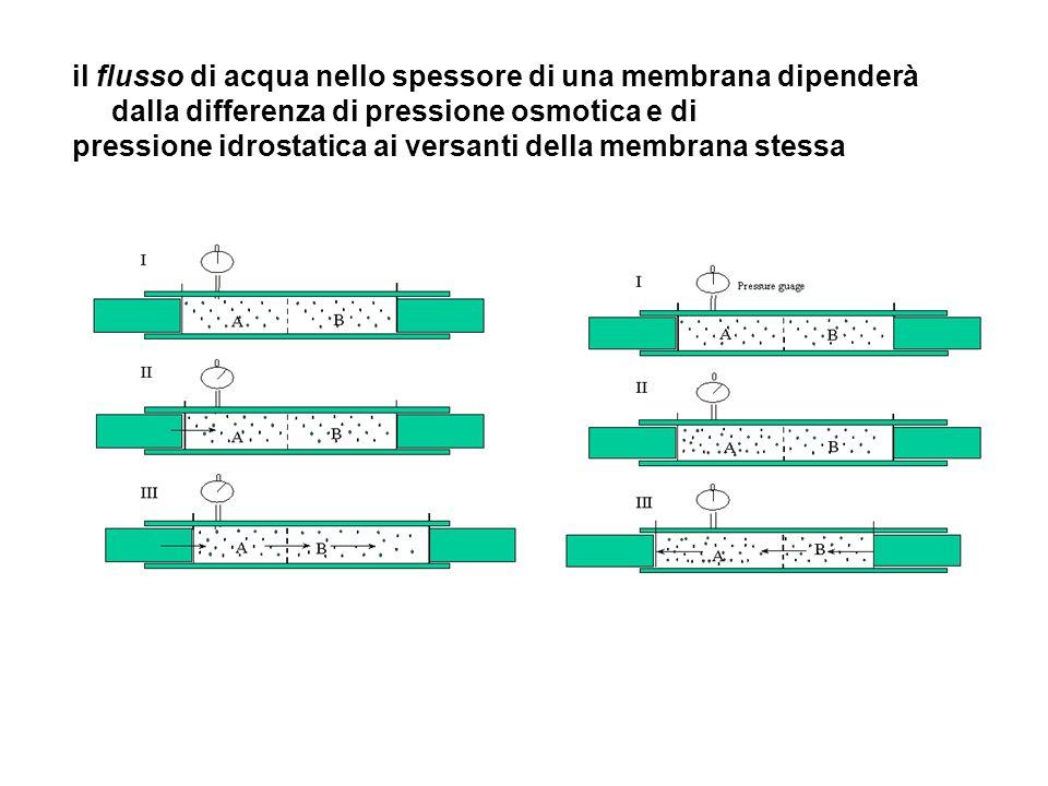 il flusso di acqua nello spessore di una membrana dipenderà dalla differenza di pressione osmotica e di pressione idrostatica ai versanti della membra