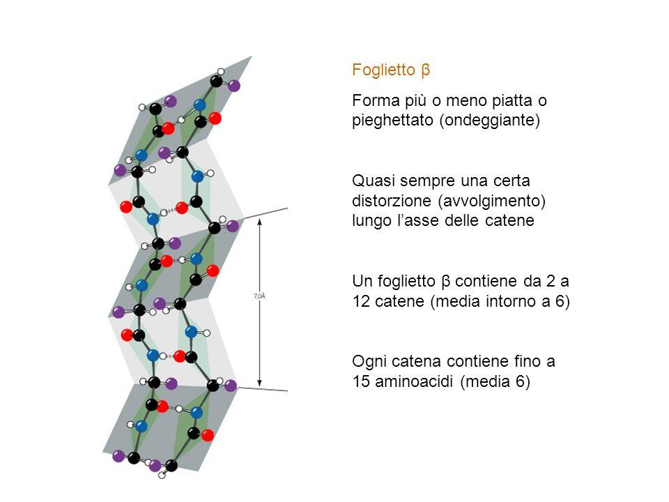 Foglietto β Forma più o meno piatta o pieghettato (ondeggiante) Quasi sempre una certa distorzione (avvolgimento) lungo lasse delle catene Un fogliett