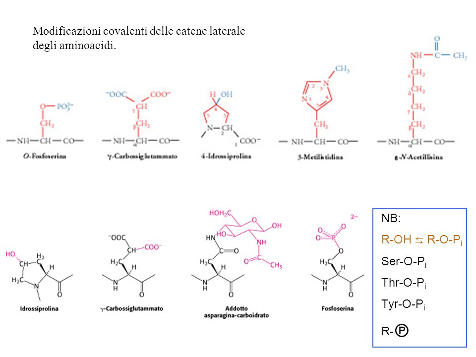 Modificazioni covalenti delle catene laterale degli aminoacidi. NB: R-OH R -O-P i Ser-O-P i Thr-O-P i Tyr-O-P i R-