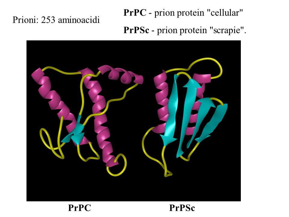 Prioni: 253 aminoacidi PrPC - prion protein