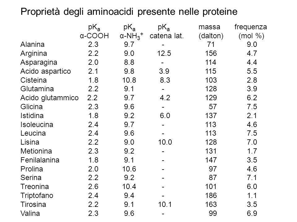 Proprietà degli aminoacidi presente nelle proteine pK a pK a pK a massa frequenza α-COOH α-NH 3 + catena lat.(dalton) (mol %) Alanina 2.3 9.7 - 71 9.0