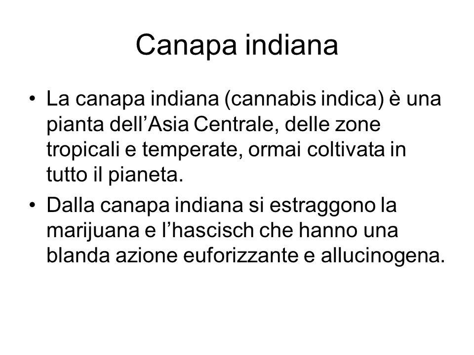 Canapa indiana e cannabinoidi La marijuana è una miscela di foglie, fiori e steli della canapa indiana, lhascisch è ottenuto dallimpasto della resina della cannabis, estratta dal polline dei suoi fiori, con grasso animale o miele.