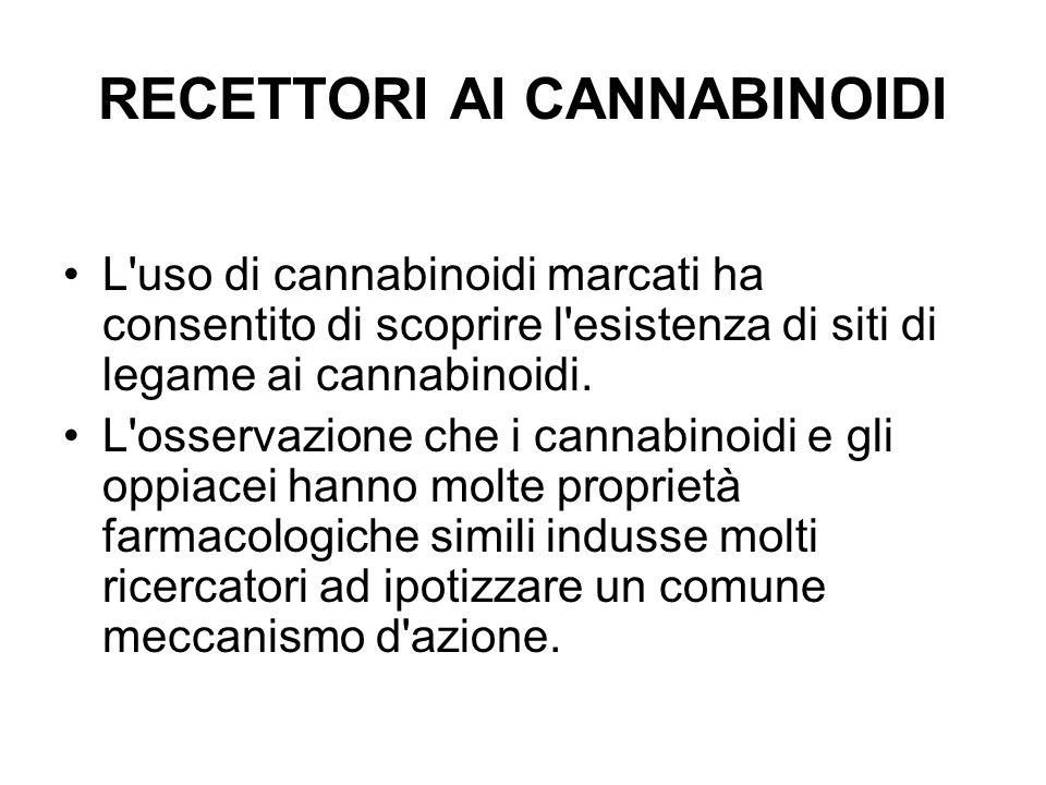 recettori È stata dimostrata una eccellente correlazione tra la potenza farmacologica di diversi cannabinoidi in differenti modelli sperimentali e la loro affinita per il sito di legame, dimostrando che questo recettore media tutti gli effetti farmacologici e comportamentali dei cannabinoidi.