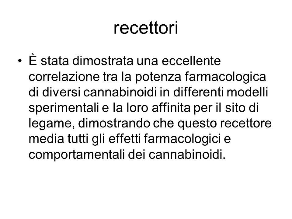 Localizzazione dei recettori Riguardo alla distribuzione anatomica dei recettori ai cannabinoidi, la massima densità è stata descritta nei gangli della base e nel cervelletto.