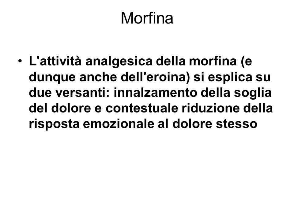 morfina Morfina ed eroina producono sensibili ripercussioni sulla funzione respiratoria, riducendola complessivamente e alterandone sia il ritmo che il volume.