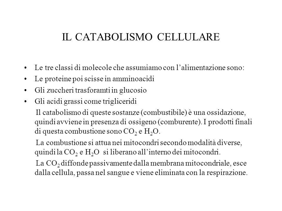 IL CATABOLISMO CELLULARE Le tre classi di molecole che assumiamo con lalimentazione sono: Le proteine poi scisse in amminoacidi Gli zuccheri trasforamti in glucosio Gli acidi grassi come trigliceridi Il catabolismo di queste sostanze (combustibile) è una ossidazione, quindi avviene in presenza di ossigeno (comburente).