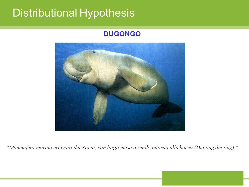 Distributional Hypothesis DUGONGO Mammifero marino erbivoro dei Sireni, con largo muso a setole intorno alla bocca (Dugong dugong)