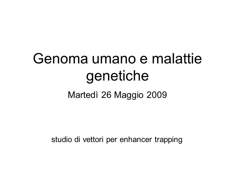 Genoma umano e malattie genetiche Martedì 26 Maggio 2009 studio di vettori per enhancer trapping