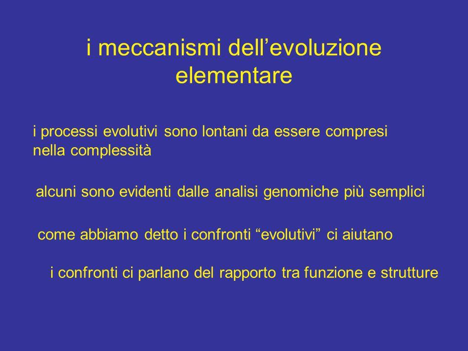 i meccanismi dellevoluzione elementare i processi evolutivi sono lontani da essere compresi nella complessità alcuni sono evidenti dalle analisi genom