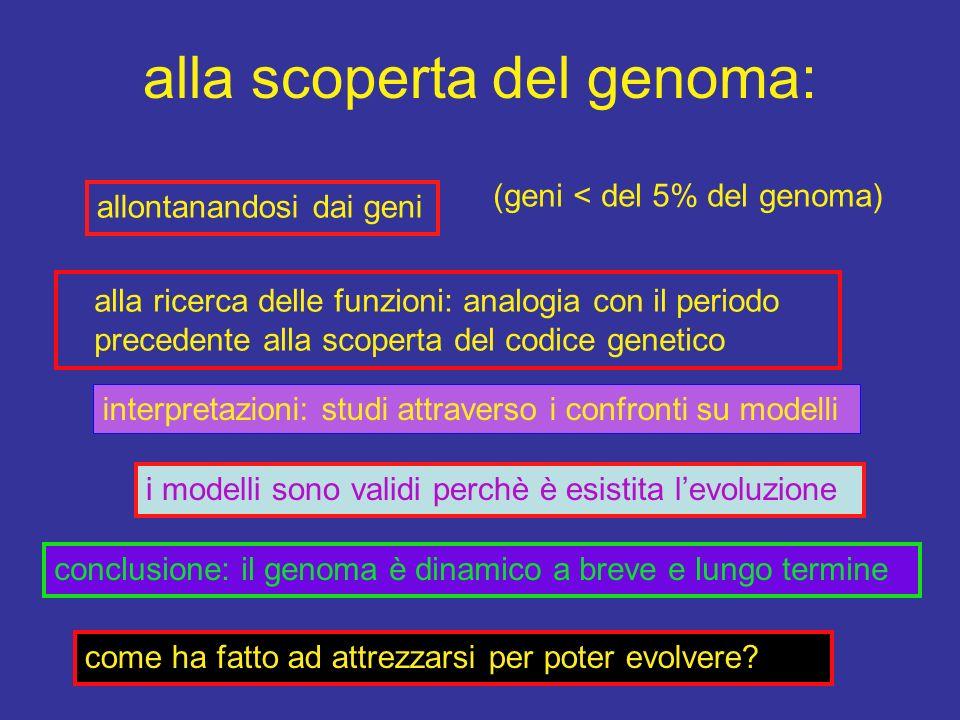 alla scoperta del genoma: allontanandosi dai geni alla ricerca delle funzioni: analogia con il periodo precedente alla scoperta del codice genetico in