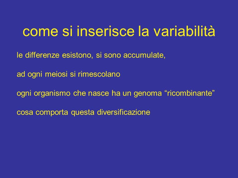 come si inserisce la variabilità le differenze esistono, si sono accumulate, ad ogni meiosi si rimescolano ogni organismo che nasce ha un genoma ricom