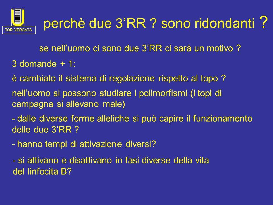 Chromosome 14 IgH3RR-2 SF AL928742 ( 40 kb) H 2 B HS3 B U2U2 U4U4 U5 B R3 H HS1,2 E R3r U5r U1 R1 U3U3 U6 U7U7 U 8r B U6r HS4 Ub1 U 4-5 R3 U7r Ub2 B H R4 U9U9 R5 Ub3 U 10 R5 U1 1 U 12 R6 SA2.5 A2RA2F Alu U15U16 H LTR END OF HOMOLOGY WITH ALFA1 U14U13 Ub4 H 1 B HS3 B U2 U4 U5 B R3 H*H* HS1,2 E R3rU5r U1R1 Ua1 R2 U3 U6U7U8 B U6r HS4 BH Ua2 R4 Ua3 U9 Ua4 R5 U10 U11 R5 U12 R6 U13 SA2.5 A2R Alu U15 U16 H LTR END OF HOMOLOGY WITH ALFA2 K10 retrovirus ELK2 H U 14 Ua5 A B centromero 3 1 2 4 1 2 clone CHR77 (35.616 kb) Poly A site Poly A site IgH3RR-1 TOR VERGATA