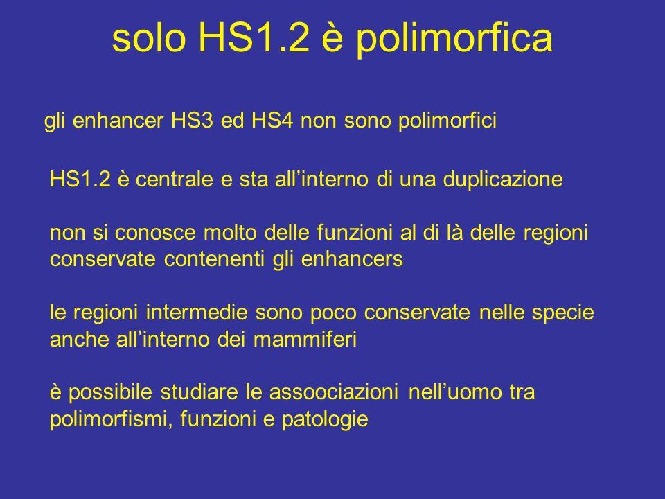solo HS1.2 è polimorfica gli enhancer HS3 ed HS4 non sono polimorfici HS1.2 è centrale e sta allinterno di una duplicazione non si conosce molto delle funzioni al di là delle regioni conservate contenenti gli enhancers le regioni intermedie sono poco conservate nelle specie anche allinterno dei mammiferi è possibile studiare le assoociazioni nelluomo tra polimorfismi, funzioni e patologie