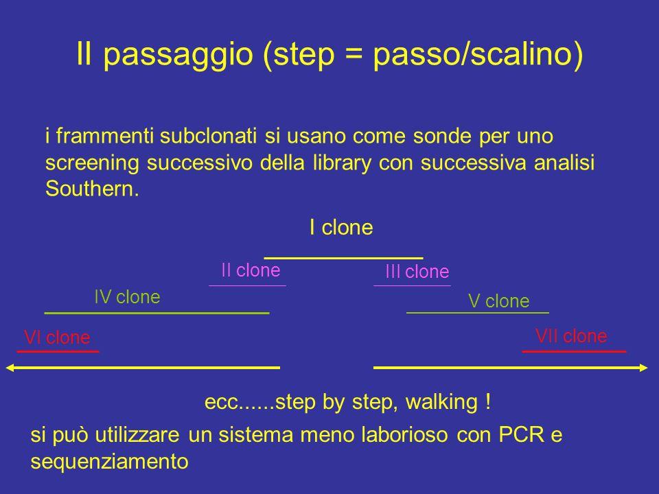 II passaggio (step = passo/scalino) i frammenti subclonati si usano come sonde per uno screening successivo della library con successiva analisi South